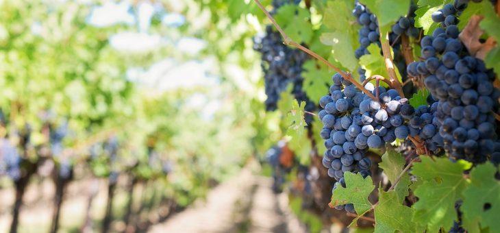 Métiers dans le vin : les contraintes rencontrées